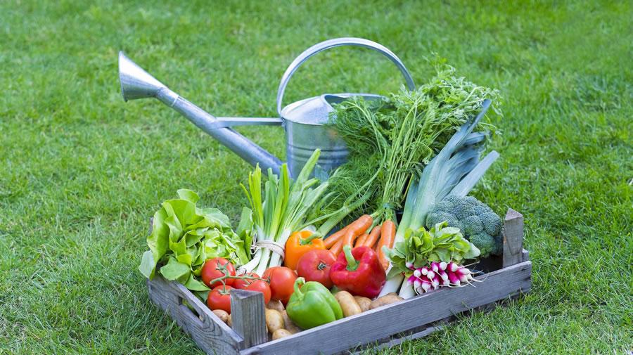 Bona garden un jardin pour tous for Jardin pour tous